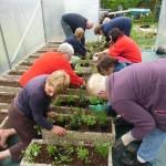 Confection des jardinières : merci aux bénévoles